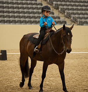 State Equestrian Competition